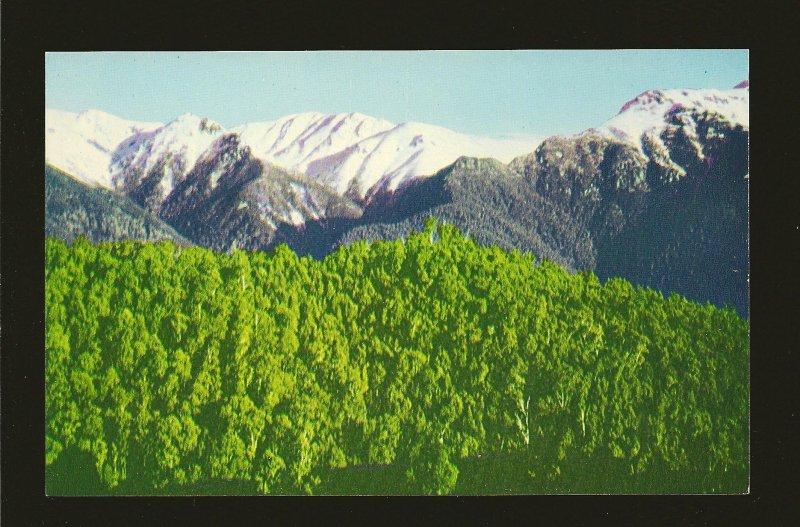 Australia Snowy Mountains Range Gechi Side 1960's Color  Postcard Unposted