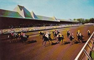 A Field Of Thoroughbreds Driving Through The Long Stretch At Famed Saratoga N...