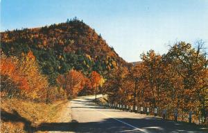 Magnificent Fall Foliage, Vermont/VT Postcard, Near Mint!