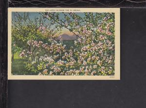 Apple Blossom Time in VA Postcard