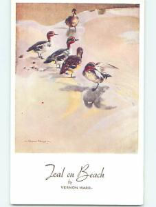 Unused Pre-1980 signed VERNON WARD - BIRDS ON THE BEACH o9870