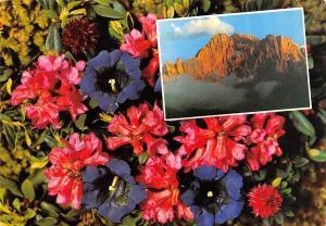 Italy Flora delle Dolomiti Monte Civetta Dolomitenflora Flowers