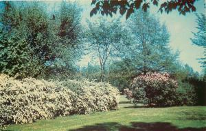 Goodland, Indiana, IN, Foster Park, Chrome Vintage Postcard c5783