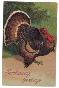 Thanksgiving Tom Turkey Vintage PFB Finkenrath 7721 Embossed German Postcard