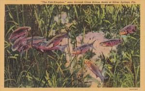 Florida Silver Springs Fish Kingdom Seen Through Glass Bottom Boats Curteich