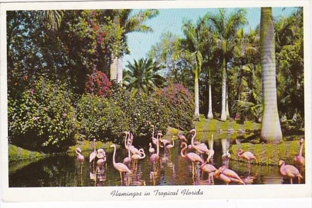 Florida Flamingos 1960