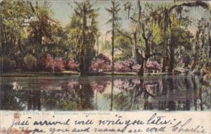 Tucks Across The  Lake Magnolia Gardens Charleston South Carolina 1914