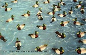 Florida Ducks Spending The Winter In The Sunshine State