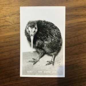 Vtg Real Photo Postcards Kiwi San Diego Zoo RPPC ANIMALS