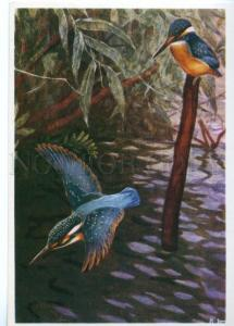 153415 HUNT Kingfisher by Komarov old Russian color PC