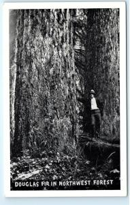 US Forest Service Douglas Fir Tree Northwest Forest USA Vintage Postcard C17