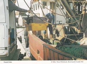 Fresh Fish Unloading Fishing Boats Hampshire Womens Institute Postcard