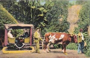 Ox Team With Cart Madeira Carro De Bois