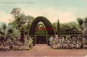THE MAZE, HOTEL DEL MONTE, CALIFORNIA Monterey 190?