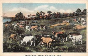 Bicknell Indiana Cow Pasture Greeting Antique Postcard K100149