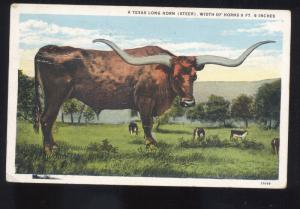 A TEXAS LONGHORN STEER COW VINTAGE POSTCARD LONG HORN LONGHORNS