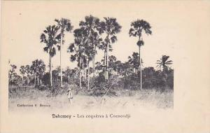 Les Coqueres A Cococodji, Dahomey, Africa, 1900-1910s