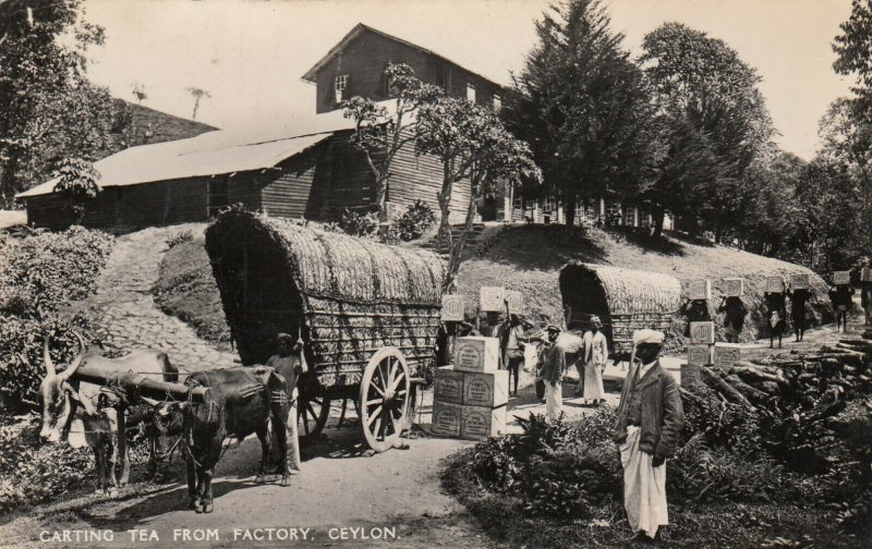 RP: Carting tea from factory , CEYLON , 1910-30s
