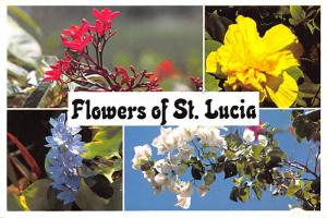 Flowers of St Lucia -