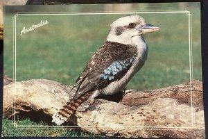 Australia Kookaburra - Unposted Large Card