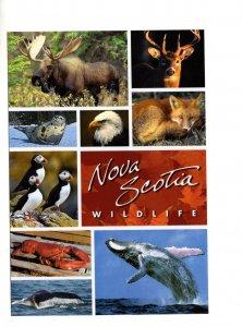 5 X 7 in Large Nova Scotia Wildlife, Moose, Deer, Fox, Birds, Seal Whale Lobster