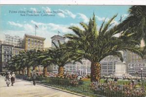 California San Francisco Palms Along Post Street Union Square