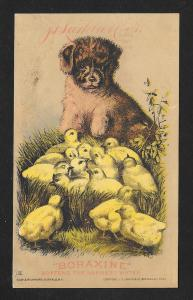 VICTORIAN TRADE CARD Boraxine Dog & Chicks