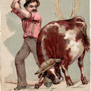1889 Man Killing Bull Arbuckles Ariosa Coffee Victorian Trade Card