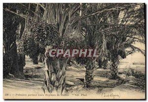 Old Postcard Palms carrying their schemes of dates