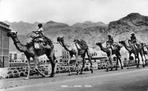 Yemen Aden Camel Train, Natives 1954
