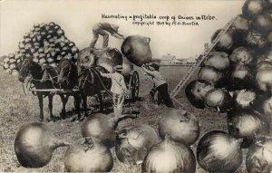 1909 RPPC Harvesting Onions Crop Nebraska Horse Cart Unused Exaggerated Postcard