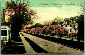 1910s Rochester, New York Postcard Magnolias in Bloom, Oxford Street Houses