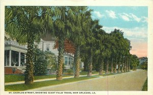 1920s St Charles Street Palm Trees New Orleans Teich Residences Postcard 6789