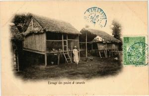 CPA Enlevage des poules et canards MADAGASCAR (709634)