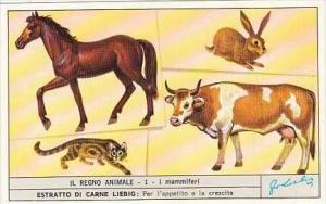Liebig S1866 Animal Kingdom #1 Mammals Horse Cow
