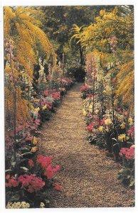 Longwood Gardens Kennett Square PA Flower Walk Acacia Cyclamen Vintage Postcard