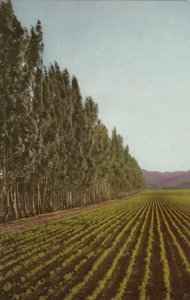 SAN LUIS OBISPO , California , 1950-60s ; Farm Land