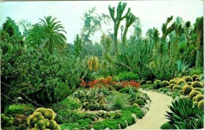 Vintage Postcard Desert Garden Huntington Library San Marino California 1975 936