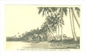 Coconut trees along shore, New Caledonia, 20-30s