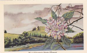 WEST VIRGINIA , 50-60s ; State Flower Big Laurel