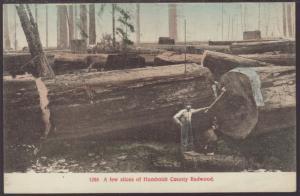 A Few Slices of Humboldt County Redwood Postcard