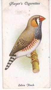 Cigarette Cards Playe Aviary and Cage Birds No 34 Zebra Finch