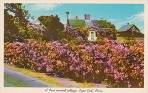 Massachusetts Cape Cod Beautiful Rose Covered Cottage