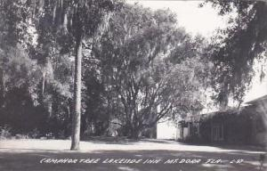 Florida Mt Dora Camphor Tree Lakeside Inn 1959 Real Photo RPPC
