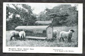 4826 - ENGLAND Bristol c1906-10 Wilmot's Star Sheep Rack ADVERTISING Postcard