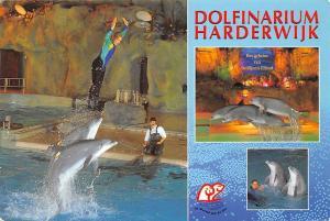 Netherlands Dolfinarium Harderwijk De Wereld van de Zee Dolphins