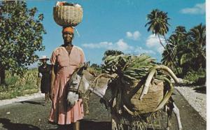 Marchande with donkey loaded with bananas on St. Marc Road, Haiti, West Ind...