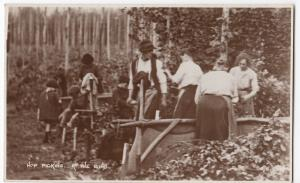 Social History; Hop Picking. At The Bins, Unknown Location RP PPC By Photochrom