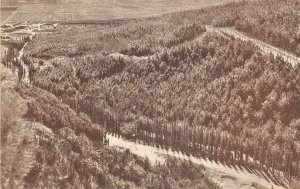 Lot178 palestine balfour forest at ginegar in the plain of jezreel palestina