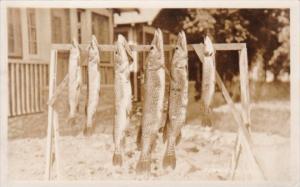Fishing Days Catch String Of Muskies Houghton Lake Michigan 1929 Real Photo